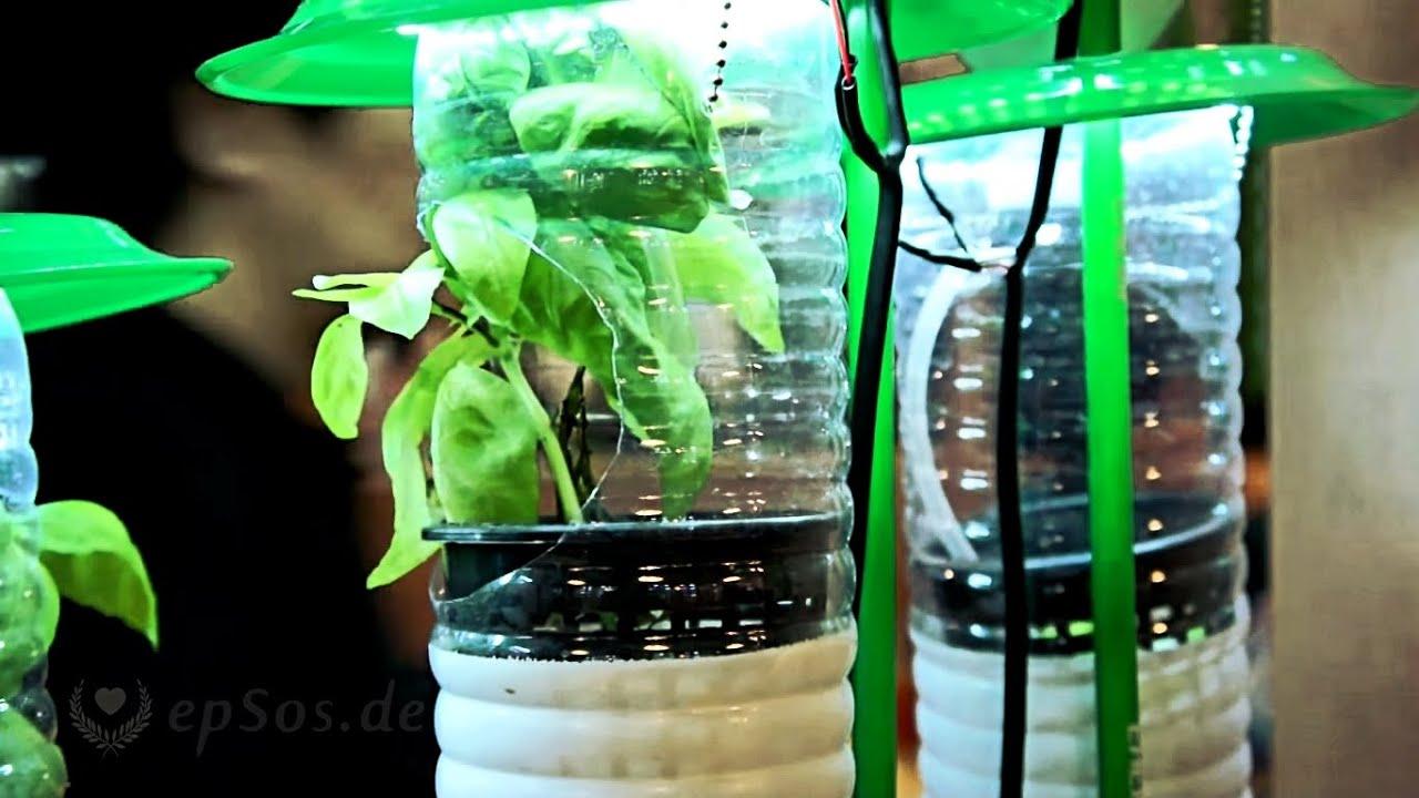 Menanam Sayur Di Botol Bekas
