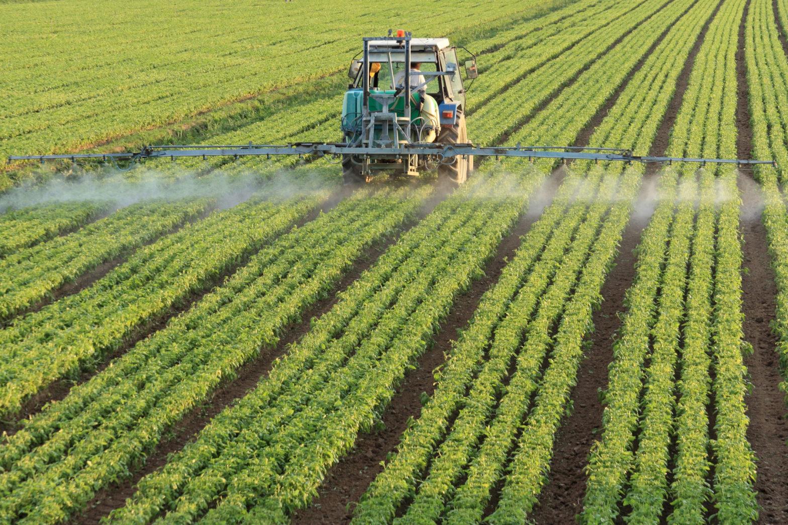 cara pemupukan jagung yang tepat