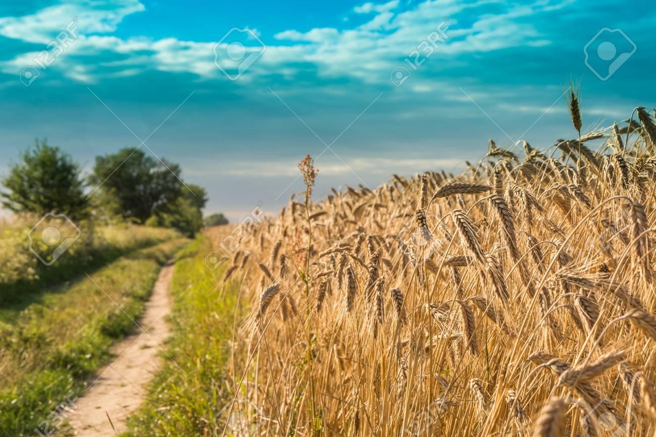 Contoh Hasil Pertanian Dan Manfaatnya