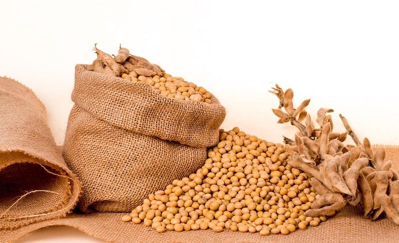 cara menanam kacang kedelai di sawah