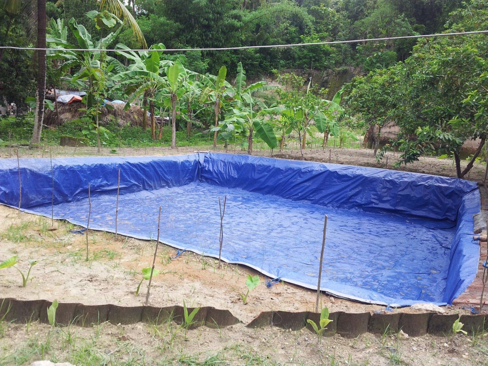 Budidaya Ikan Nila Kolam Terpal