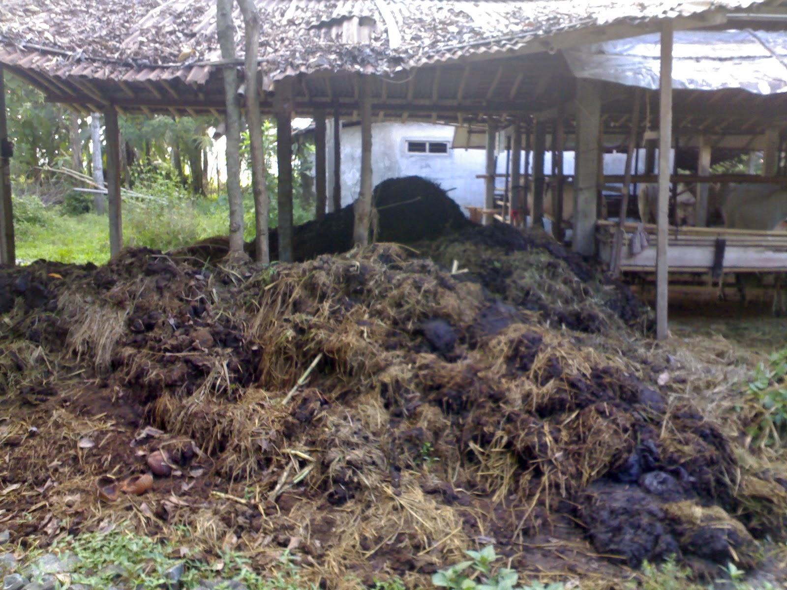 Cara Membuat Pupuk Kompos Dari Kotoran Sapi