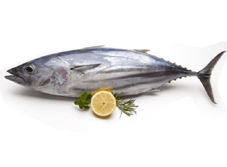 manfaat ikan tongkol
