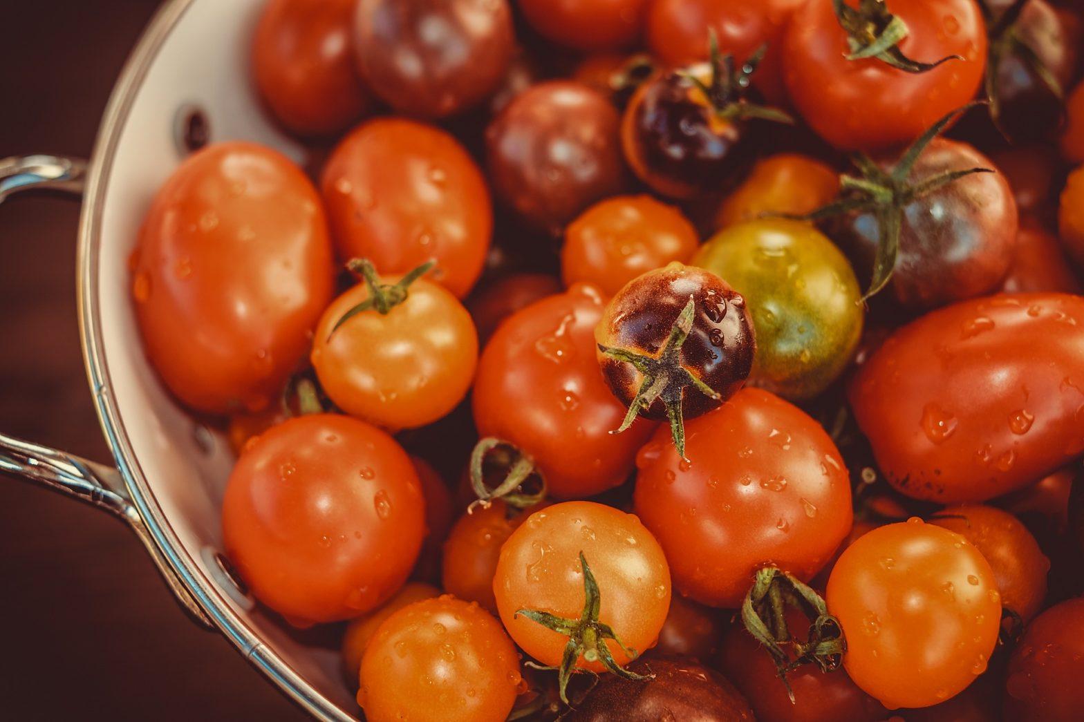 cara menanam tomat di botol