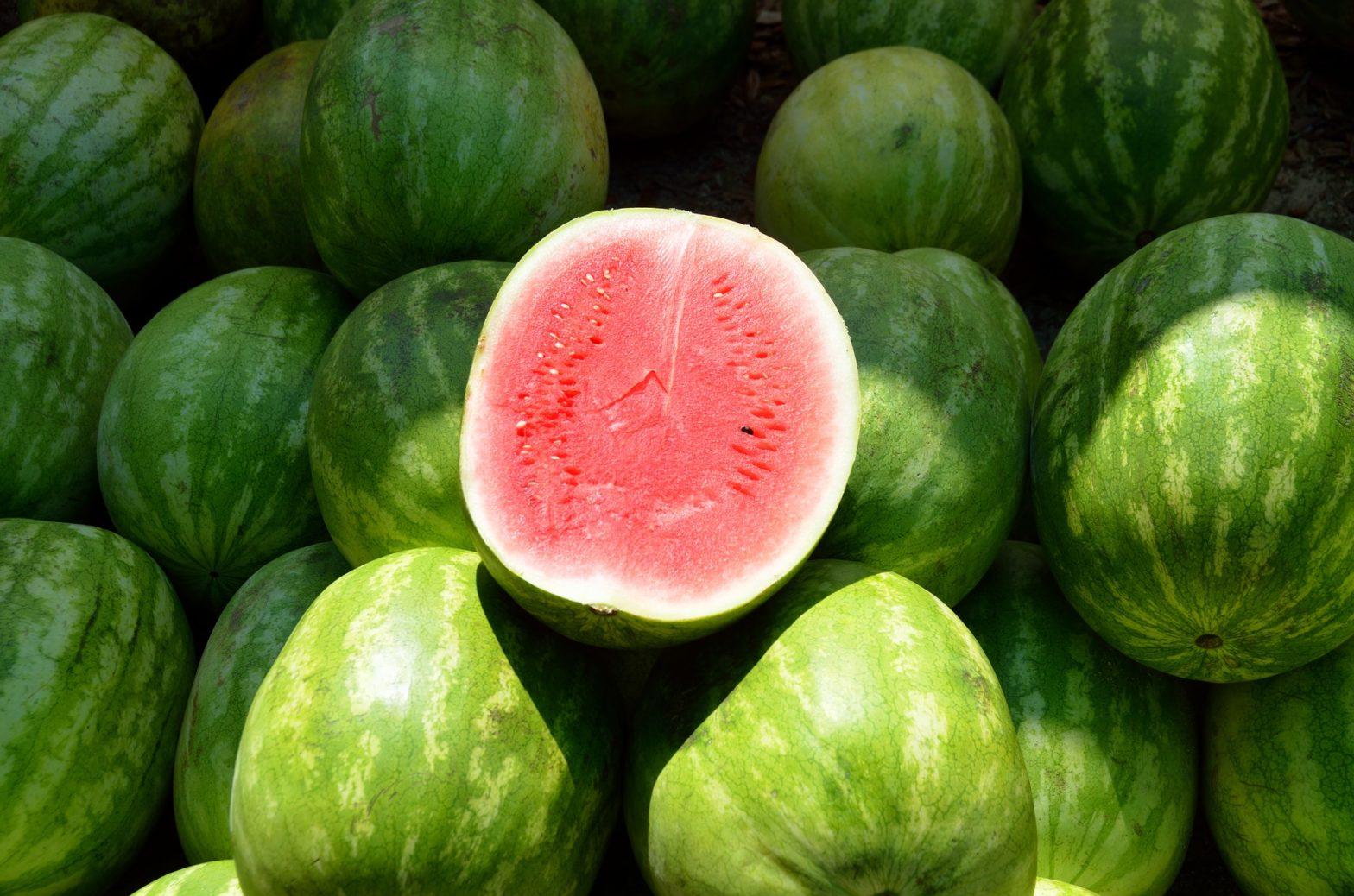 cara menanam semangka dalam pot