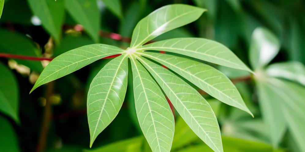 resep keripik belut daun